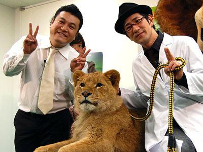アンタッチャブルと本物のライオン!