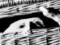 【今週のクローズアップ】トラウマ映画5選 「呪怨:呪いの家」三宅唱監督に聞く