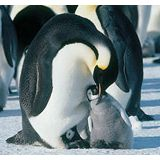 『皇帝ペンギン』、AFIが選ぶ2005年の重要作品に