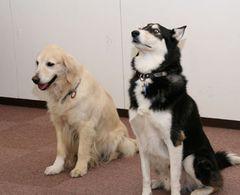 犬好きにはたまらんワン!獣医さんなど犬関係者大集合で犬懇親会!