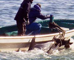 日本のイルカ漁描く『ザ・コーヴ』が東京での上映中止に!抗議殺到で全国での上映も協議中