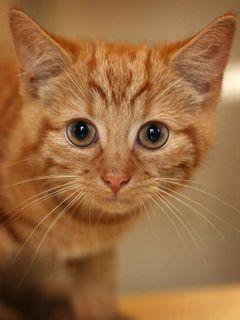 これが本当のネコ映画!?主演ネコ!共演ネコ!カメラマンもネコ!