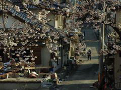 アカデミー賞ドキュメンタリー短編賞ノミネート作品東日本大震災からの復興を描いた『津波そして桜』はいまだ日本公開の予定なし…
