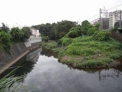 東京都にトトロの森が誕生!地権者が公益財団法人トトロのふるさと基金に無償寄附