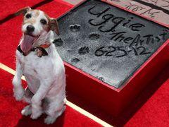 『アーティスト』の名犬アギー、犬史上初のハリウッドの星獲得!式典を引退式に