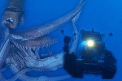 巨大イカが映画化!NHKスペシャルが劇場版に