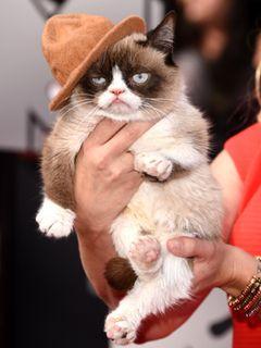 """YouTubeの""""気難しい猫""""、テレビ映画化!クリスマスに米放送"""