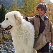 ナチスに立ち向かう孤児&野犬!「名犬ジョリィ」原作の映画化9月日本公開