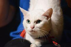 『猫侍』人気白猫、17歳にしてますます美しさに磨きをかける!