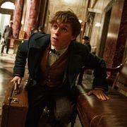 『ハリポタ』スピンオフ、魔法のスーツケースが物語のカギ!? 場面写真公開