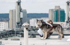 オオカミを愛し野生化していくヒロイン…女性への制約をぶち壊す爽快ムービー!