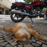 「世界ネコ歩き」ついに映画化!ネコ目線でネコを腹ばい撮影