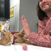 薬物中毒の青年を救った伝説のネコ来日!秘蔵写真公開