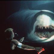 なぜサメ?映画で愛されるサメ