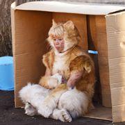キスマイ北山宏光、ニャンと猫に!『トラさん』衝撃のシーン写真