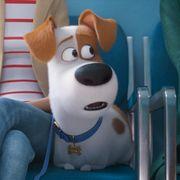 『ペット2』は2019年夏公開!バナナマンら吹替声優が続投