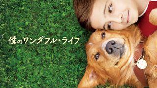 今夜『僕のワンダフル・ライフ』地上波初放送!犬と人間の絆描く感動作