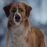 賢すぎる犬vs雪崩!『野性の呼び声』大迫力の本編映像