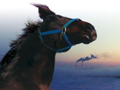 『祭の馬』にドキュメンタリー部門最優秀作品賞