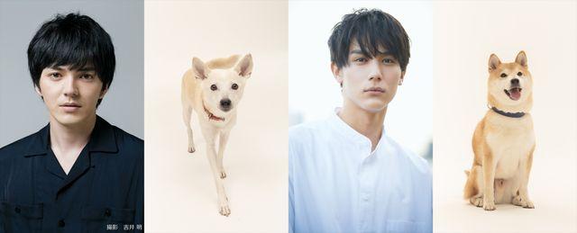 映画『犬部!』で共演する林遣都&中川大志と、劇中でバディになる犬の花子と太郎