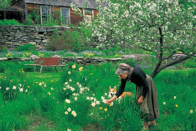ターシャさんの美しい庭にうっとり - 映画『ターシャ・テューダー 静かな水の物語』より