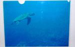 映画『海洋天堂』海亀ファイル