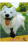 映画『犬飼さんちの犬』クリアファイル