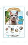 映画『先生と迷い猫』特製クリアファイル