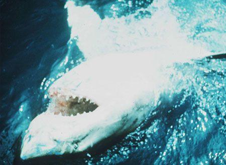『JAWS/ジョーズ』写真001